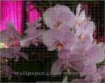 Lizensiertes Wallpaper-Bild von wallpaper.graff-waury.de - Glasmosaik-Orchidee_02